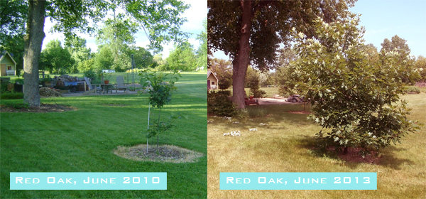 Red Oak Growth sm