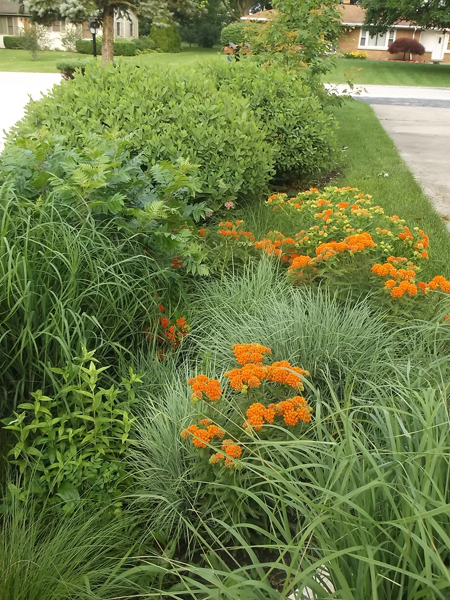 "The ""Prairie Garden"" along the driveway"